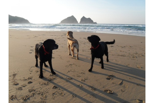 Dog Friendly Beach at Holywell Bay near Trevornick Holiday Park