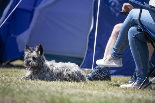 Dog-Friendly Camping at Trevornick Holiday Park