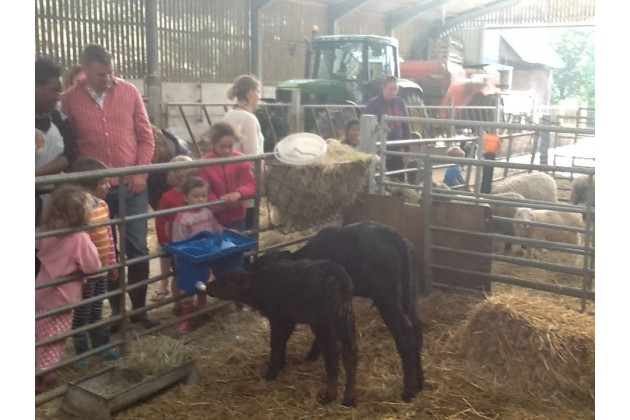 Kids helping feed the calves