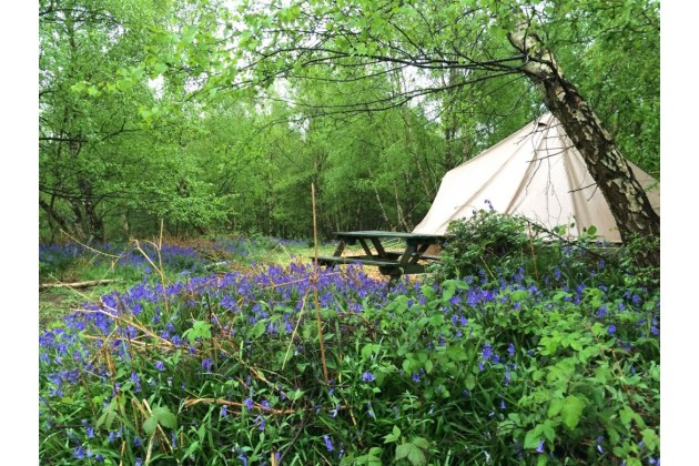 A bell tent at Beech Estate