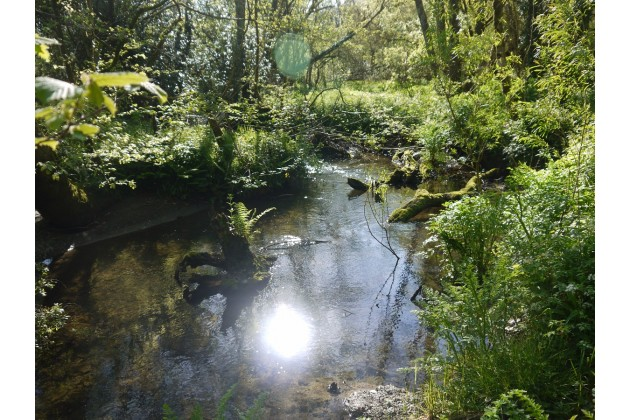 Find enchanting streams, shady glades and beautiful wildlife