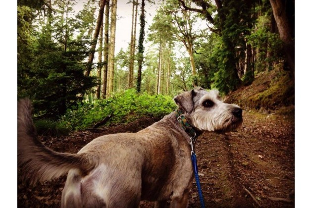 Meet Dylan the Campdog at Top of the Woods!