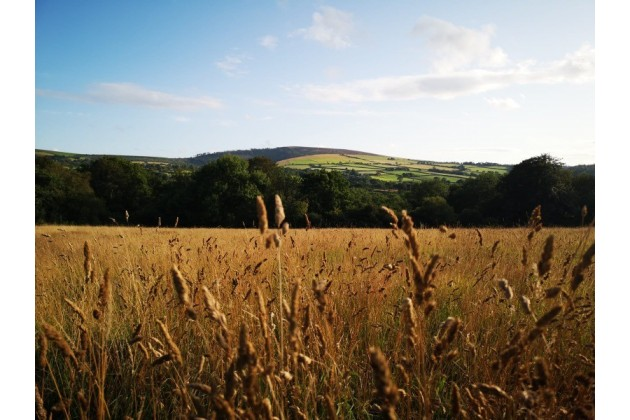 Watch the wildlife in the meadows with the Preseli Hills as your backdrop
