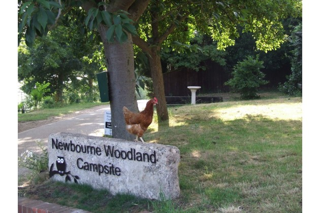 Photo of Newbourne Woodland Campsite