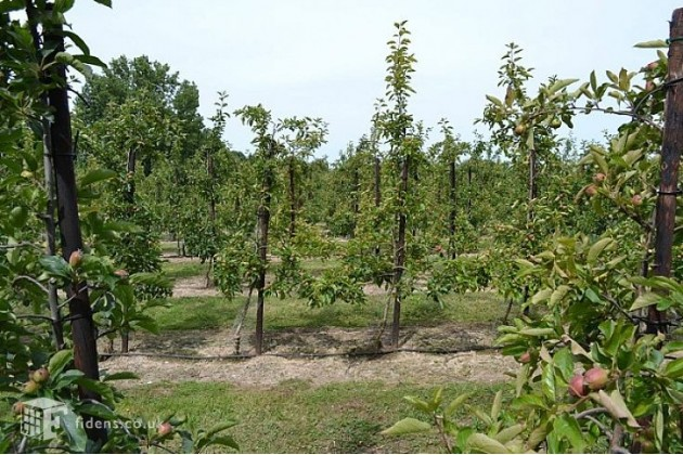 Orchards on the farm