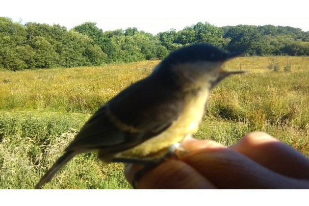 Photo of Stonechat Meadow