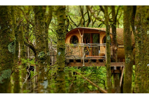 Photo of Living Room Treehouses