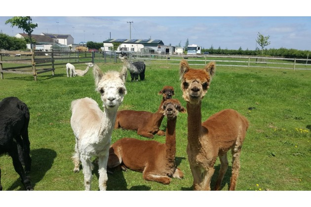 Photo of Marshland Alpacas Certificated Site